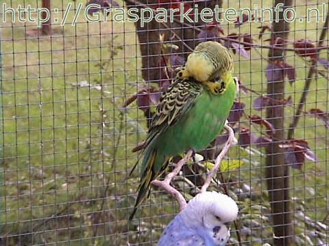 vogel eet huisjes
